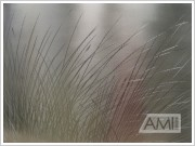 grafika steblá trávy2